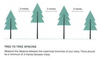 tree-spacing